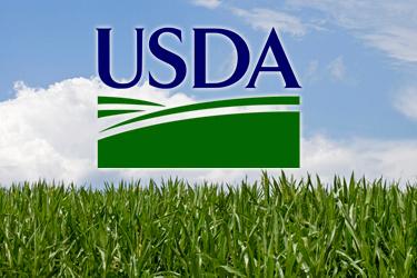 USDA збільшило прогнози виробництва зерна в Україні